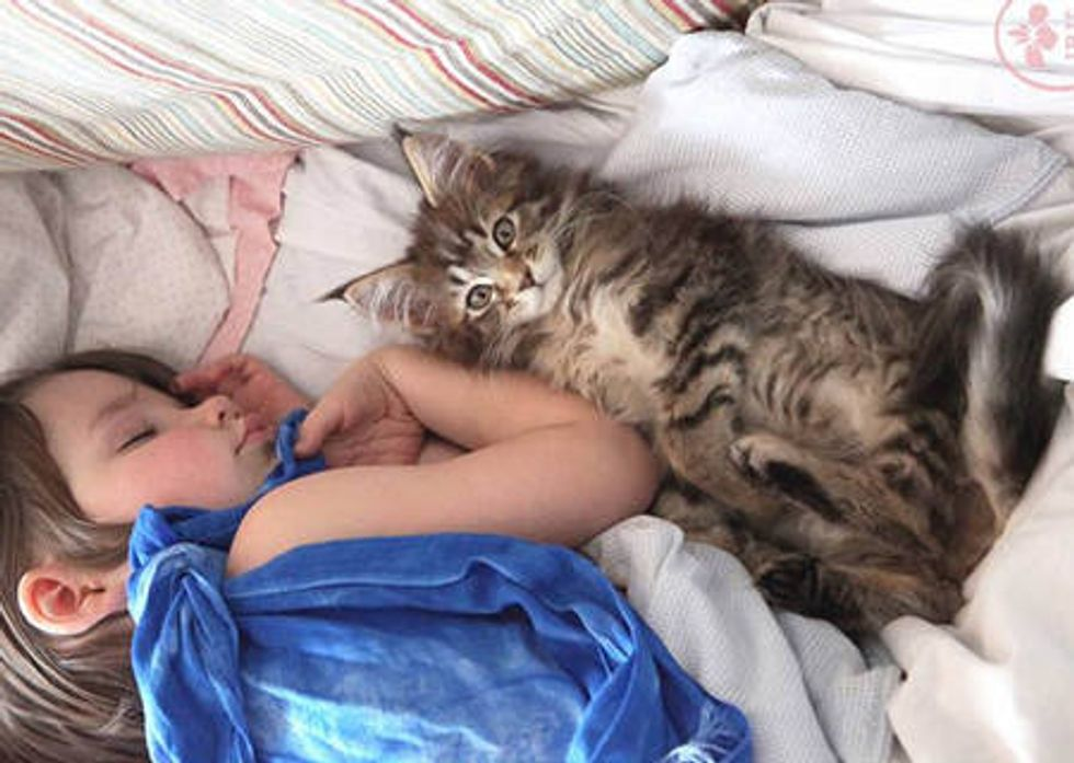 Thula The Kitten Becomes Guardian Angel To An Autistic Child