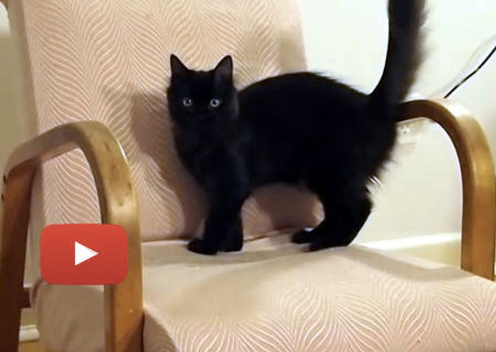 Cat Destroys Furniture!