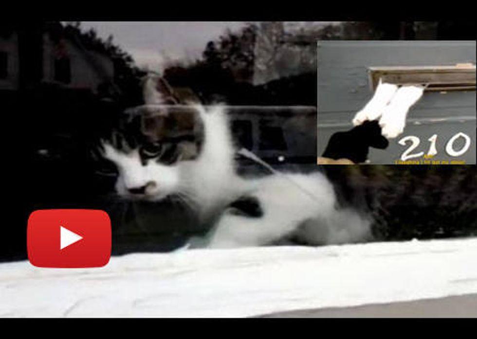 Cat Battles Mailman Through Mail Slot