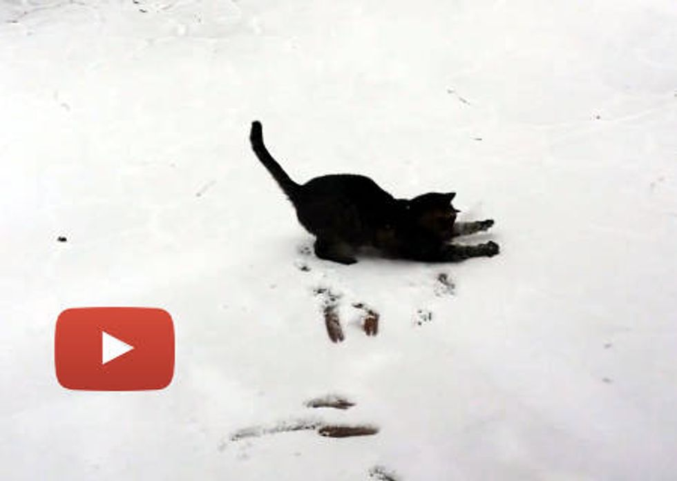Cat Sees Snow The First Time