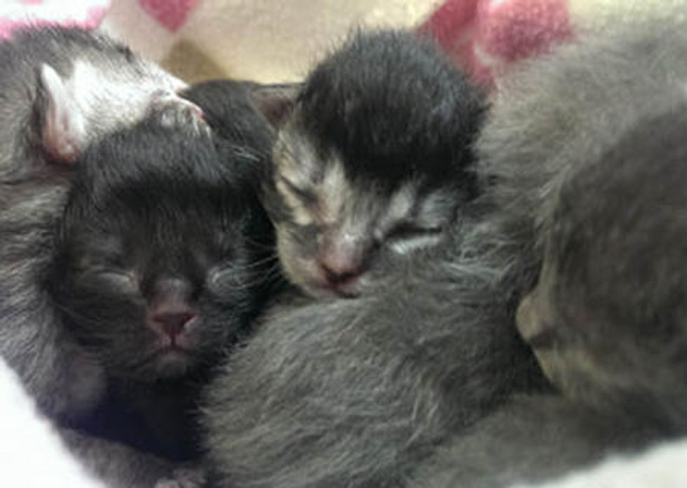 Ice Storm Orphan Kittens