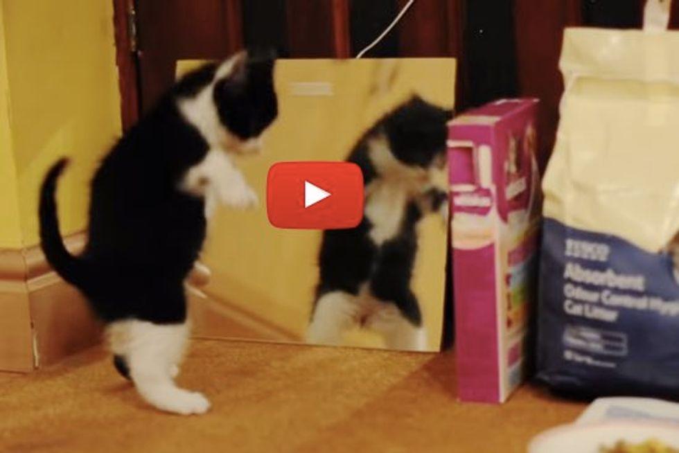 Kitty Meets Her Doppelgänger!