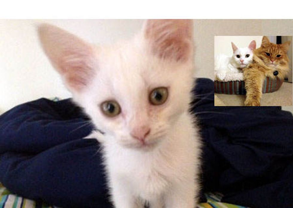 Kitten Rescued At Construction Site: Then & Now