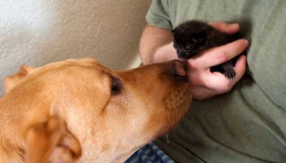 Dog Found Orphaned Kitten and Became Her New Dad