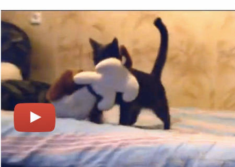 Kitty Kidnaps Toy
