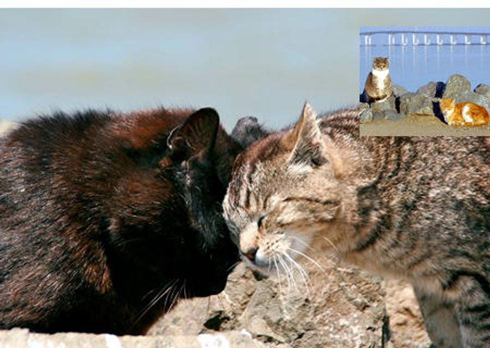 Project Bay Cat Brings Hope & Happiness To San Francisco Bay Cats