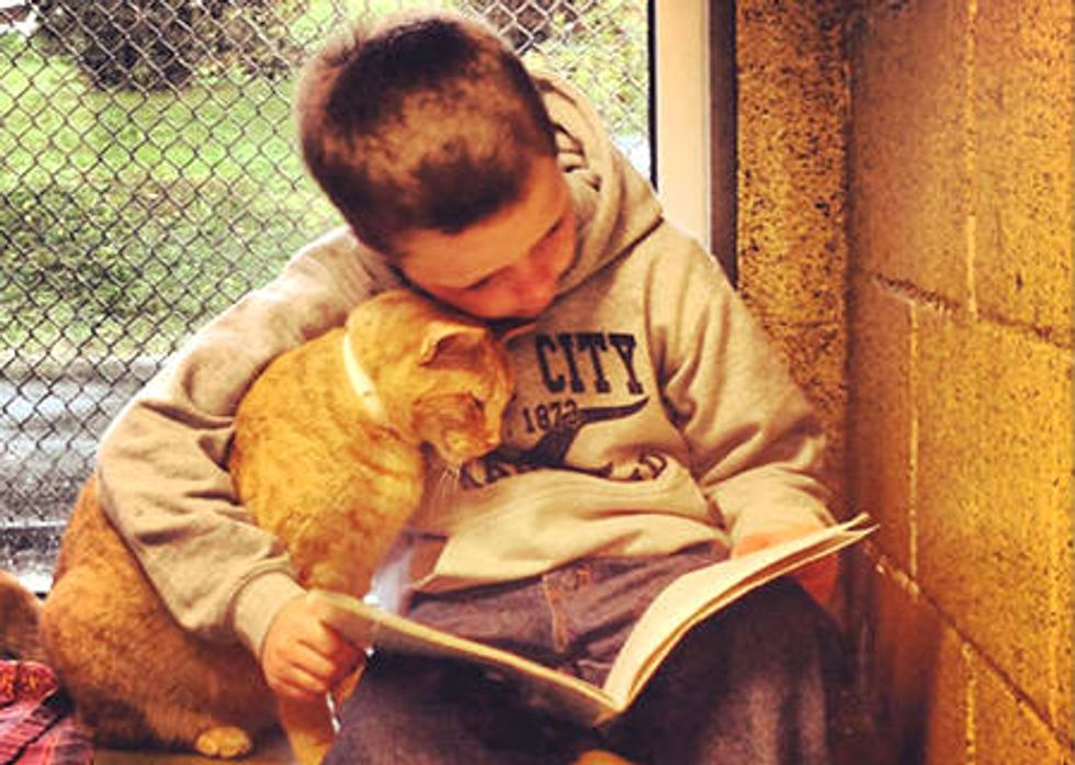 Children Read To Shelter Cats To Soothe Them