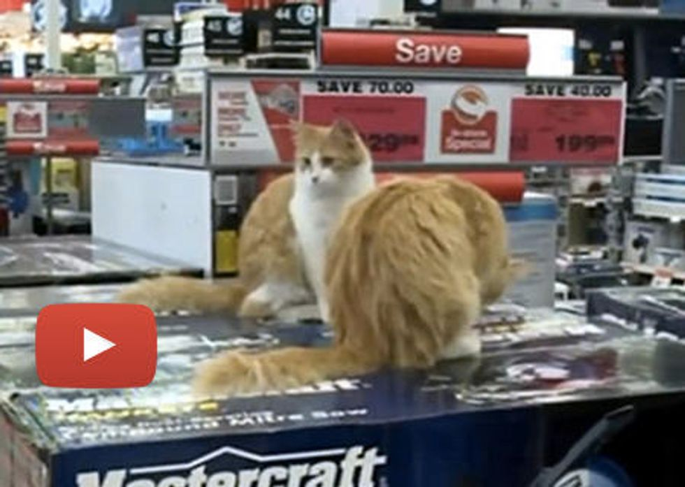 Cats Working at Canadian Tire