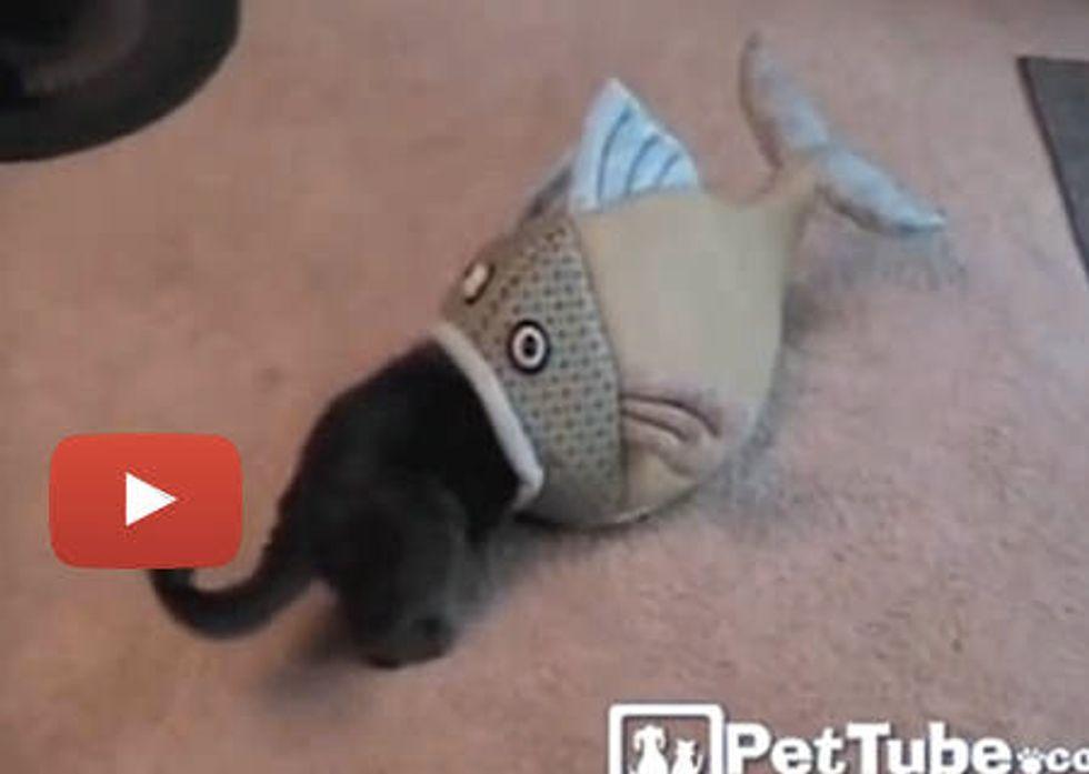 Kitty In Big Fish