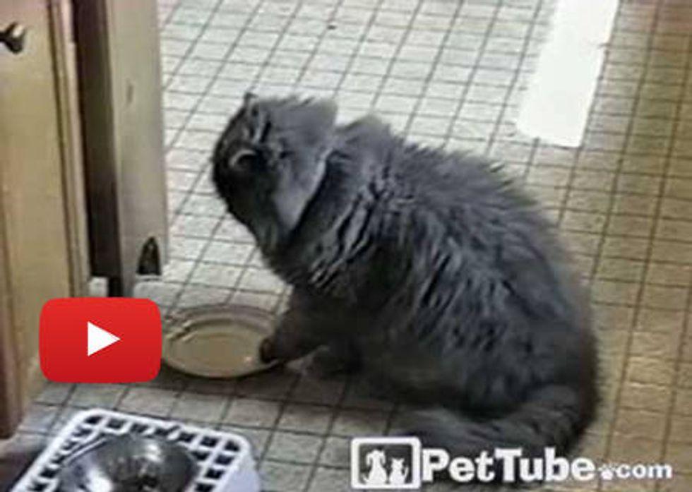 Kitty Wants Food