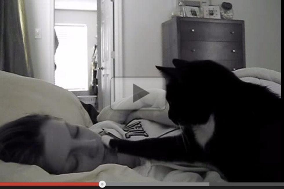 Kitty Cat Wake Up Call