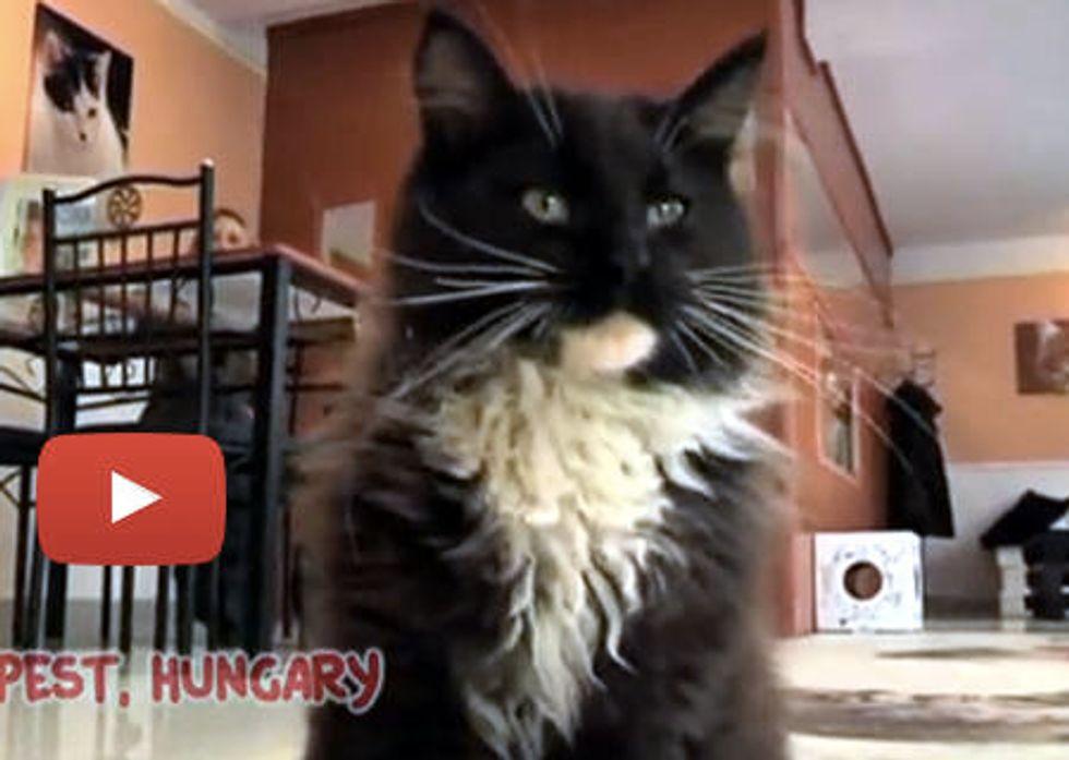Hungarian Cat Cafe