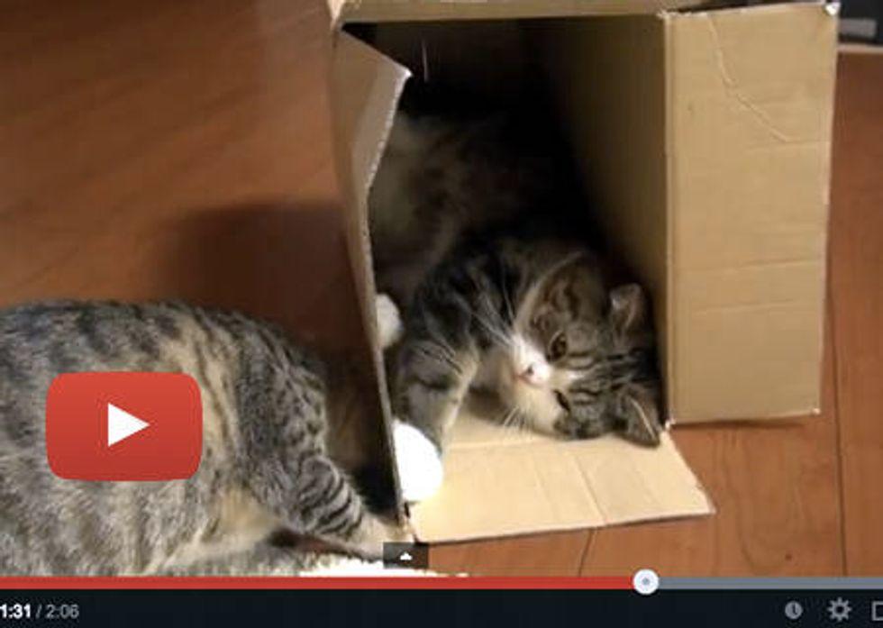 Maru And Hana In A Box!