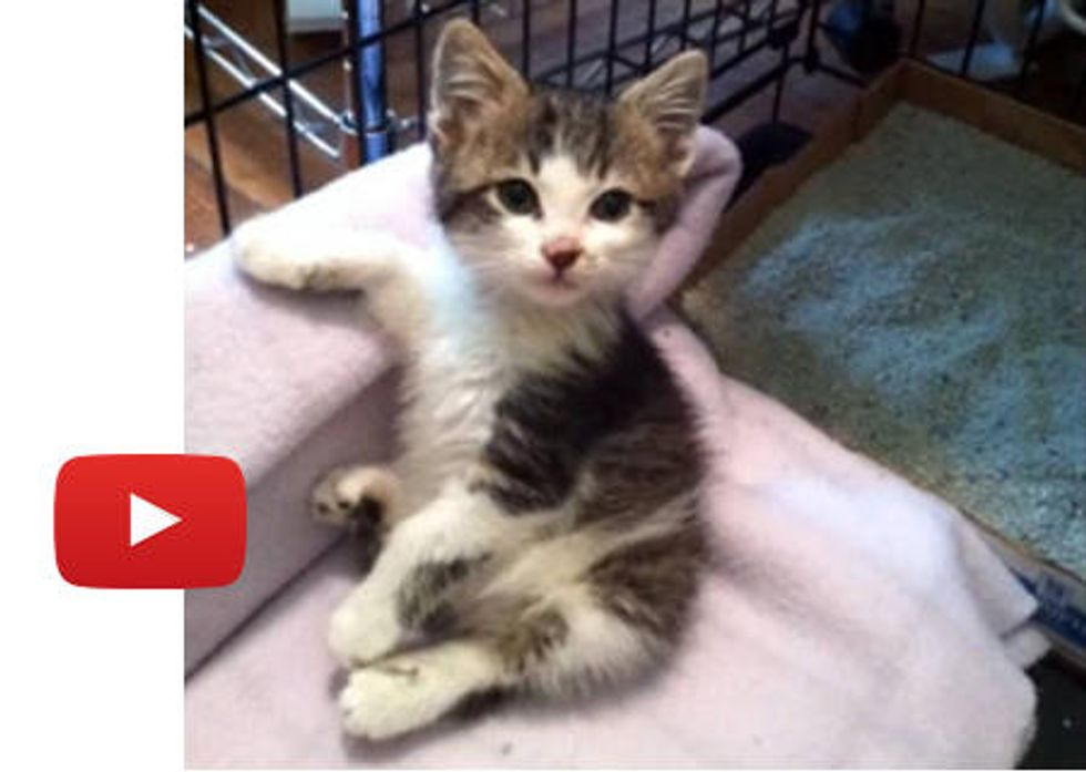 Rescue Kitty Makes An Amazing Recovery