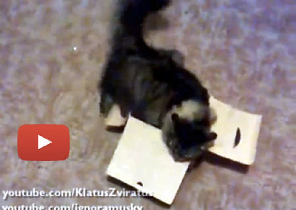 Cat Loves A Small Box