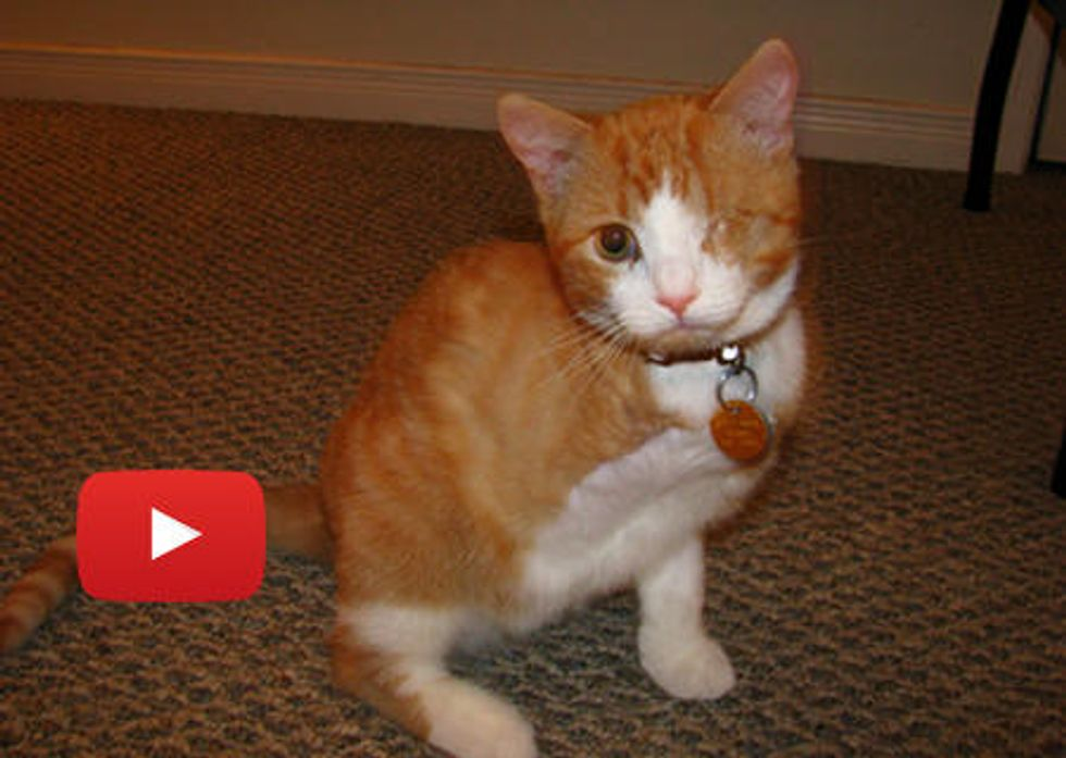 Henry The 3 Legged Pirate Cat