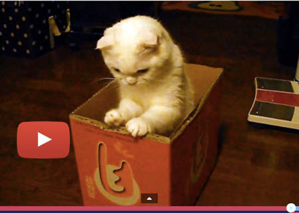 Box Cat And Mouse Toy