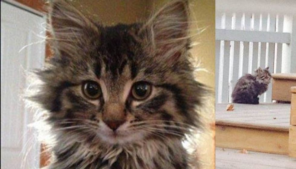This Cat Living a Feral Life Learns to Trust and Love Her Rescuers