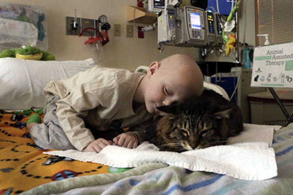 10 Year Old Cat Huck Finn Helps Heal Sick Portland Kids