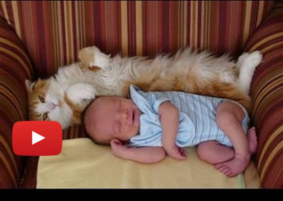 Cat Meeting Babies For The First Time