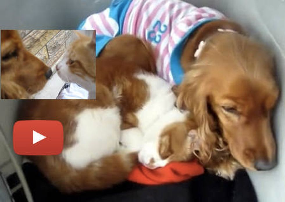 Stray Cat Follows Dog Home, Now They Are Family