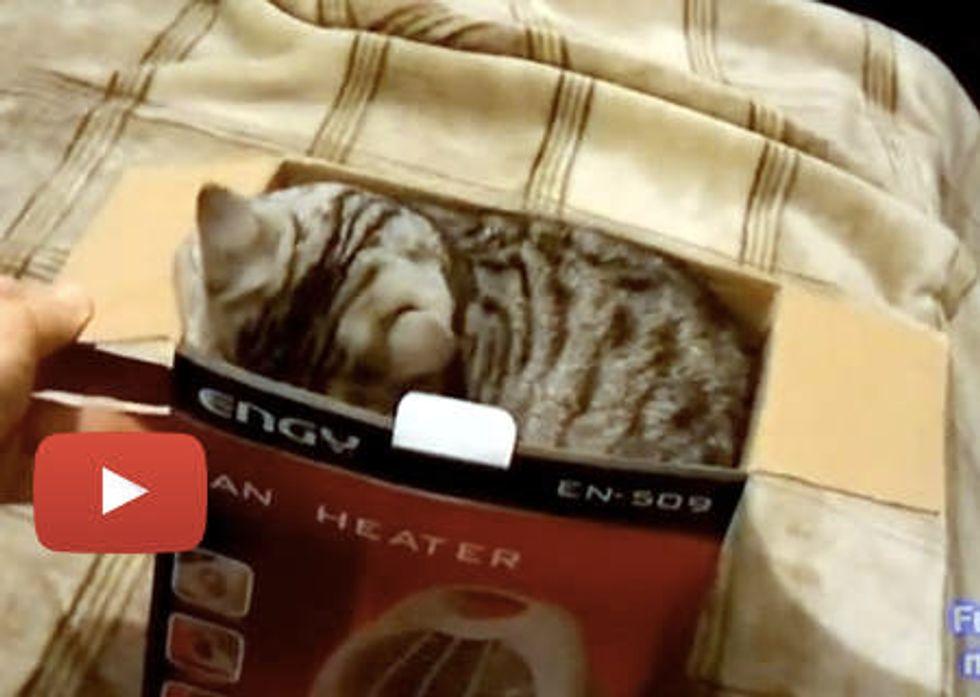 Unpacking Cat