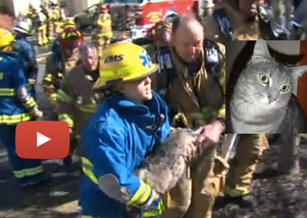 Starbuck The Cat Saved By Greensboro Firefighters & Police From Condo Complex Fire
