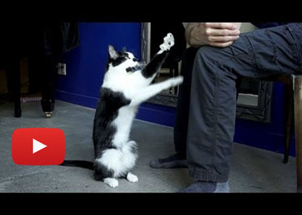 Kodi Cat Demands Petting