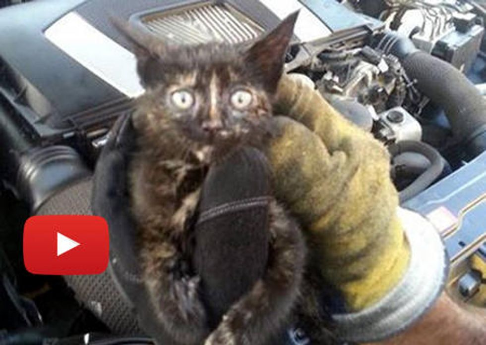 Kitten Rescued From Mercedes Benz Car Engine By Firefighters