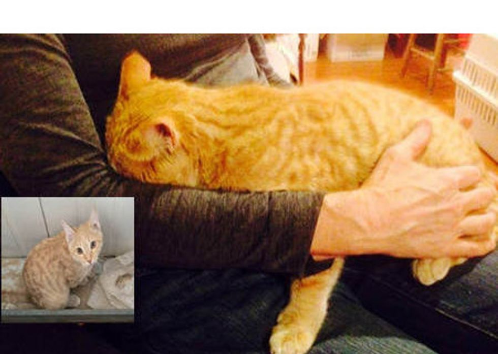 Stray Cat Rescued In Afghanistan Finds Home In The US