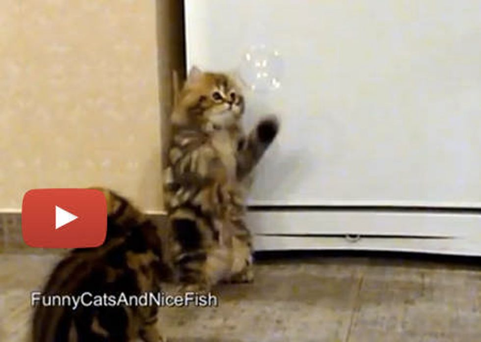 Kittens and Bubbles