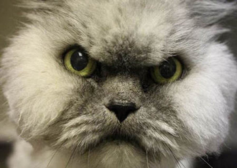 Grumpy Shelter Cat Gets Adopted. Doesn't He Look Happy Now?