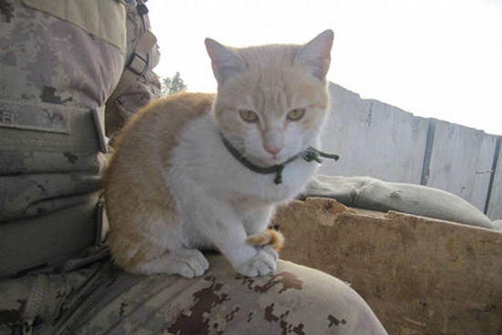 Tower Cheetah on Guard Duty