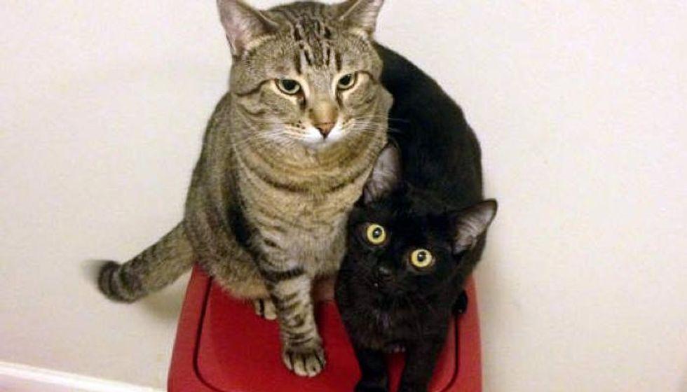 Stray Kitten Finds His Best Friend