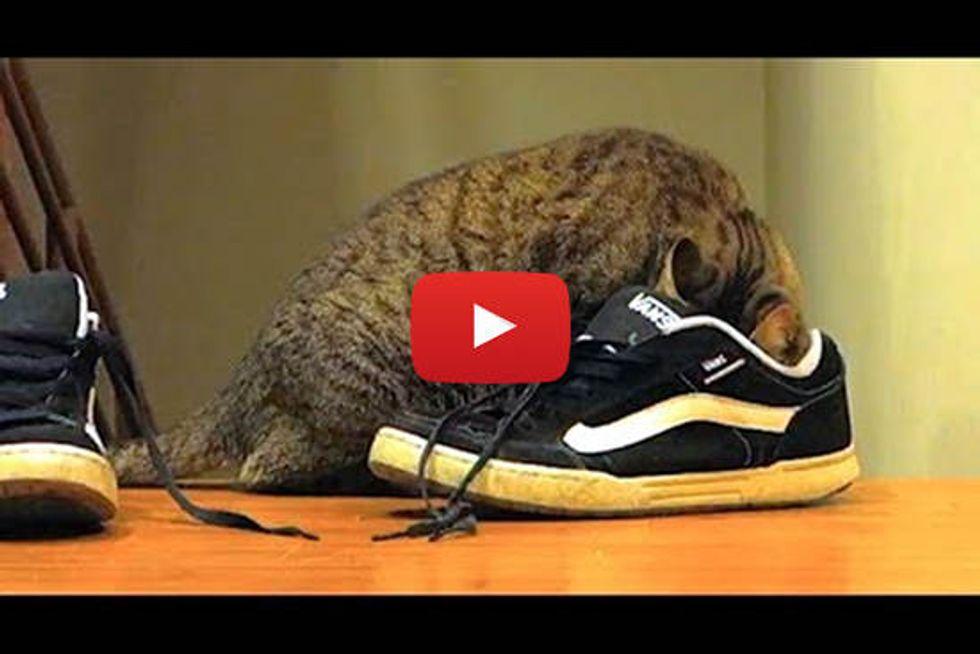 Cat Loves Shoes