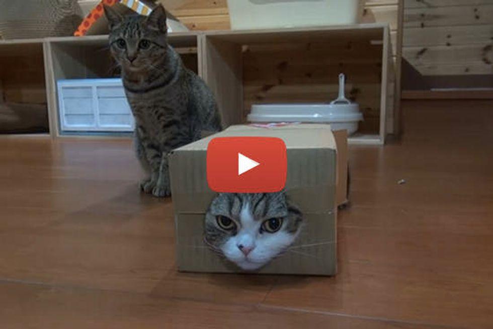 Maru, Hana, And Box