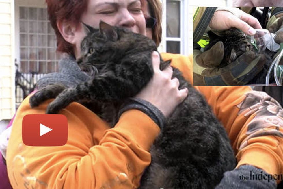 Firefighters Rescue Cat And Say Cat's Part Of Family