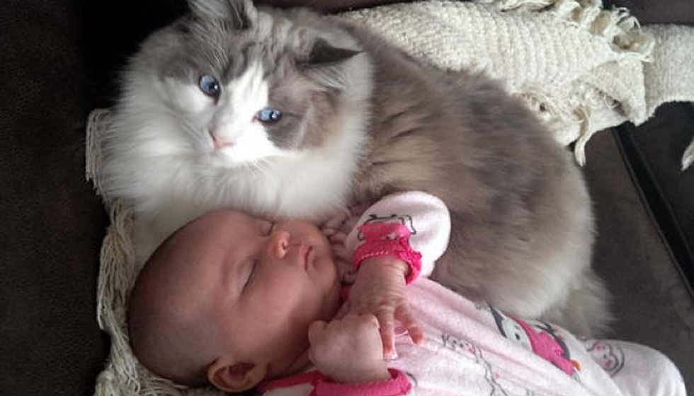 Cat Adores His Little Sister So Much He Began to Cuddle Her Before She Was Born