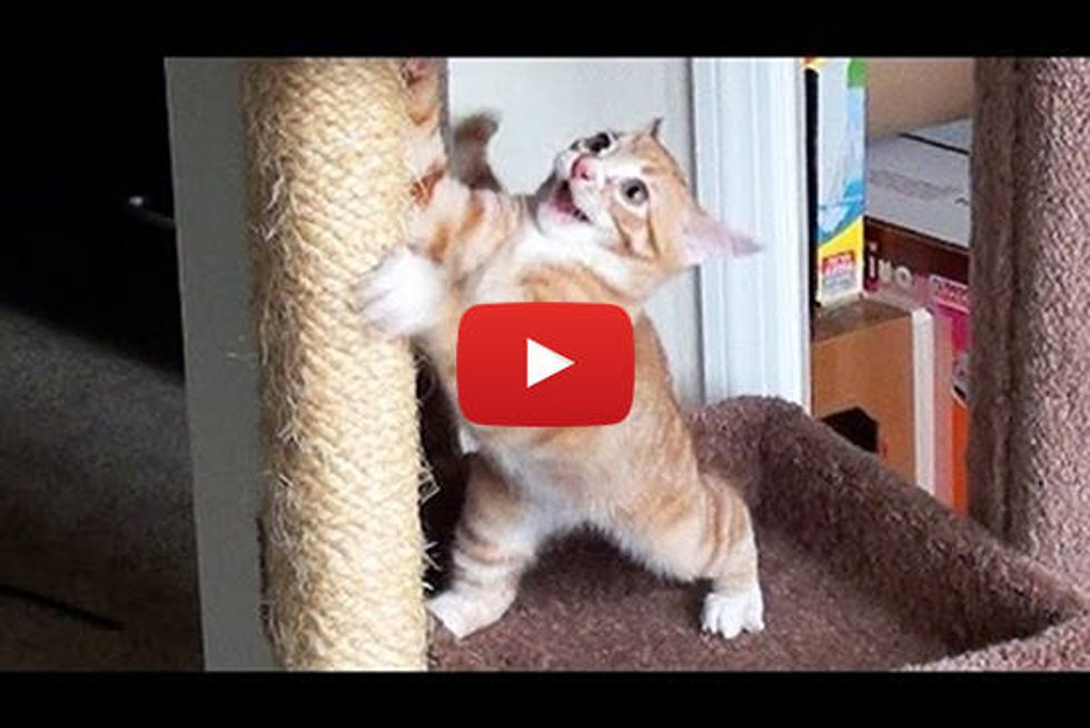 Cute Kitten Bloopers!