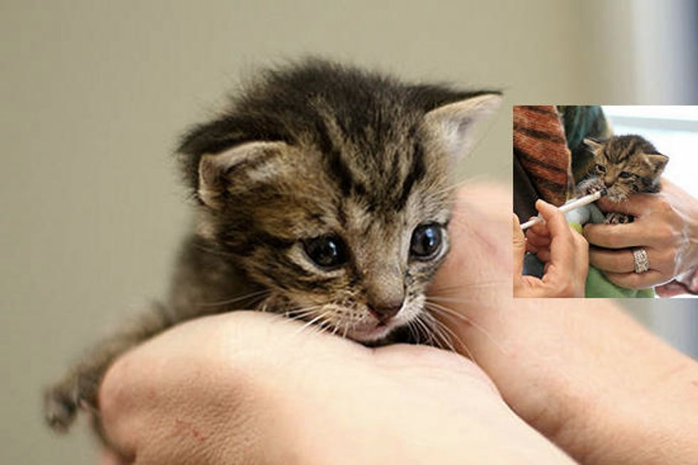 Kindness Saves Tiny Orphan Kitten