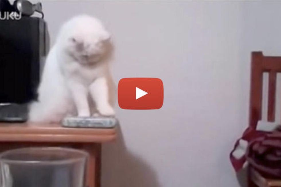 Cat Pushes Everything Off Table