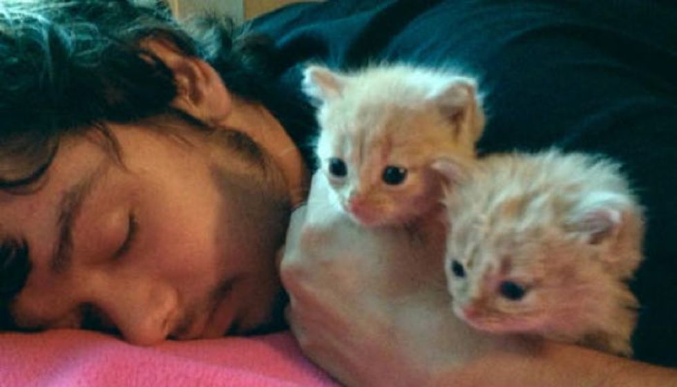 They Save Two Tiny Ginger Kittens from Trash and Make Them Their Family