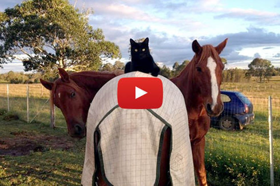 Morris The Cat & Champy The Horse