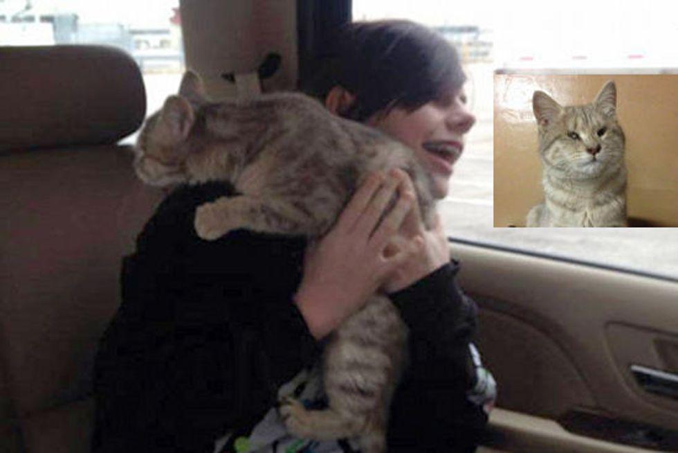 Blind Cat Rescued In Afghanistan, Now Home In America