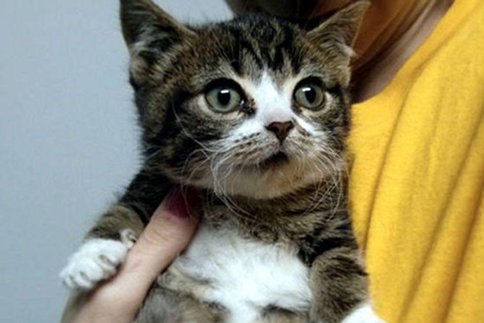 Elfie The Rescue Dwarf Cat