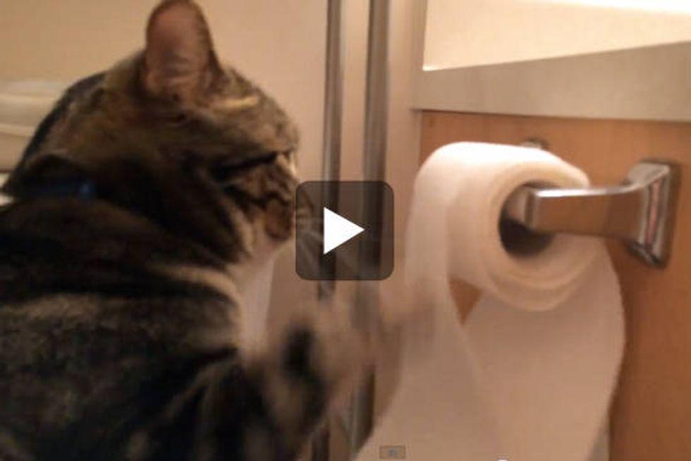 Cat Unrolls Toilet Paper Then Rolls It Back Up