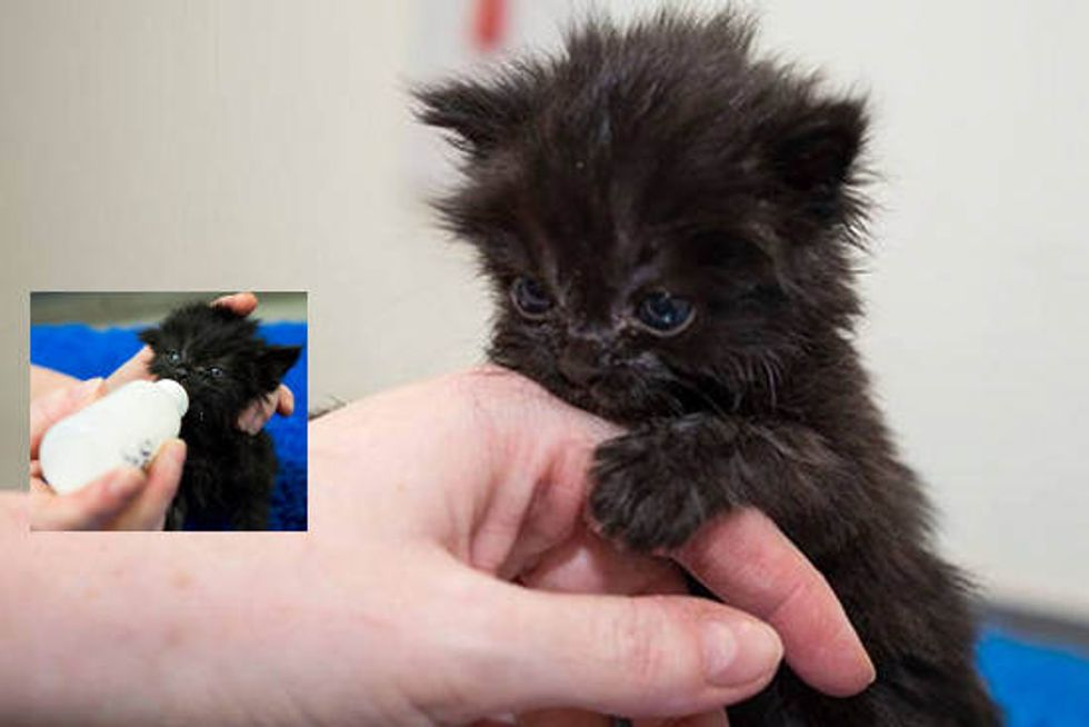 Choccy The Kitten Gets A Second Chance
