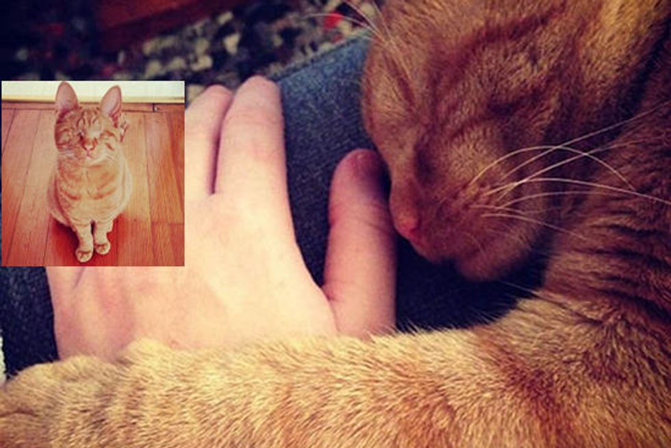 Dillon The Cat Born Blind, Lives A Normal Happy Life