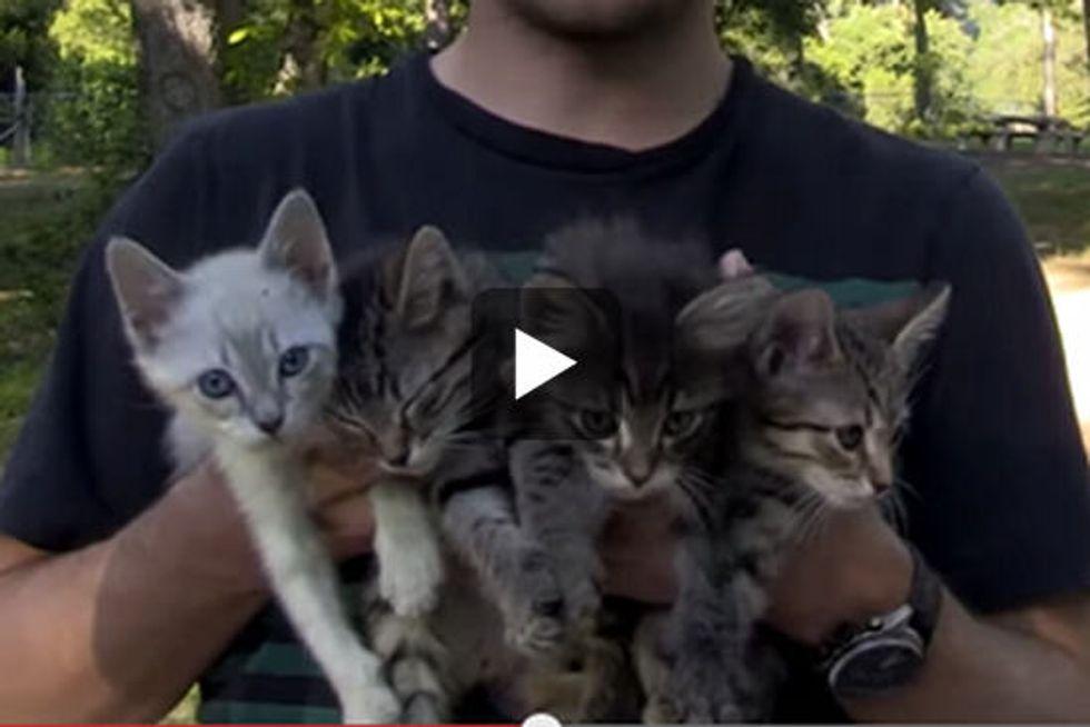 Amazing Kitten Rescue