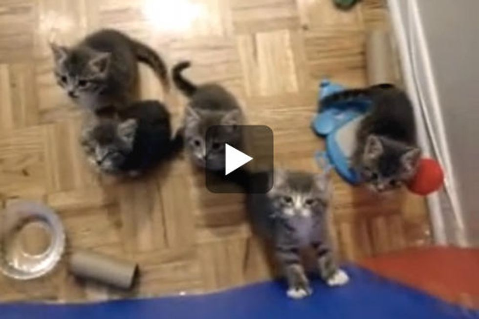 Five Tiny Fosters